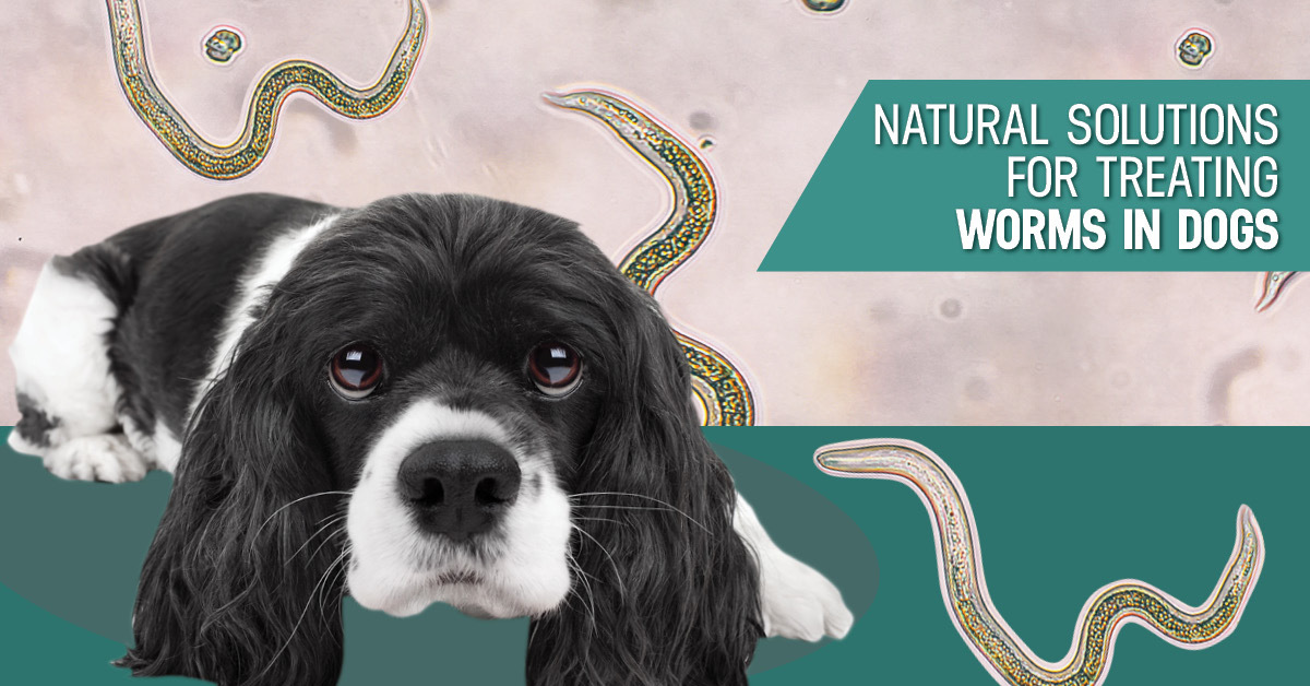 Preventing, Treating and Understanding Worms in Dogs